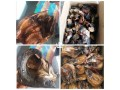 imported-thailand-fishes-in-lagos-for-sale-small-3