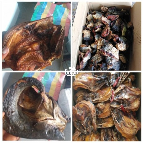 Classified Ads In Nigeria, Best Post Free Ads - imported-thailand-fishes-in-lagos-for-sale-big-3