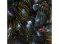 snails-in-enugu-small-0