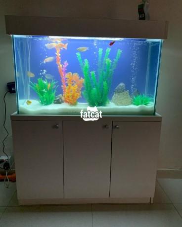 Classified Ads In Nigeria, Best Post Free Ads - standing-aquarium-in-victoria-island-lagos-for-sale-big-1