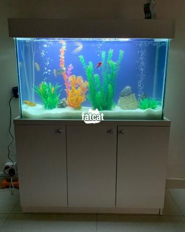 Classified Ads In Nigeria, Best Post Free Ads - standing-aquarium-in-victoria-island-lagos-for-sale-big-2