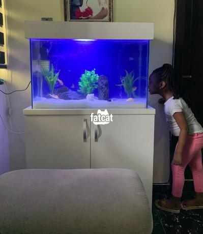 Classified Ads In Nigeria, Best Post Free Ads - standing-aquarium-big-0