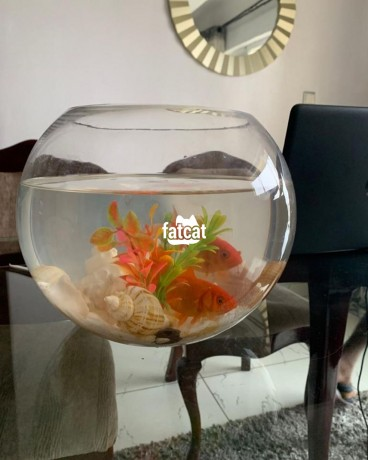 Classified Ads In Nigeria, Best Post Free Ads - fish-bowl-aquarium-big-1