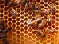 beekeeping-training-in-ikeja-lagos-small-0
