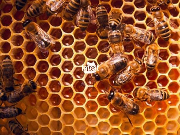 Classified Ads In Nigeria, Best Post Free Ads - beekeeping-training-in-ikeja-lagos-big-0
