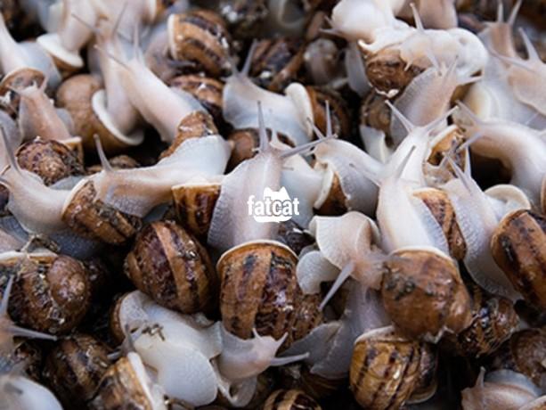 Classified Ads In Nigeria, Best Post Free Ads - snail-farming-training-in-ikeja-lagos-big-0