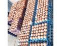 fresh-eggs-small-0