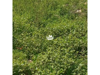 6 Plots of Land in Osogbo, Osun for Sale