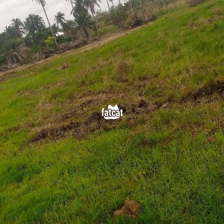 Classified Ads In Nigeria, Best Post Free Ads - plots-of-land-in-ede-osun-state-for-sale-big-0