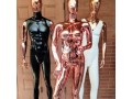 mannequins-in-ikeja-lagos-for-sale-small-3