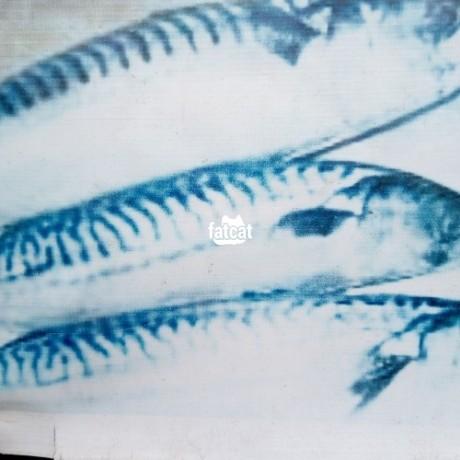 Classified Ads In Nigeria, Best Post Free Ads - carton-of-fresh-sardine-fish-big-1