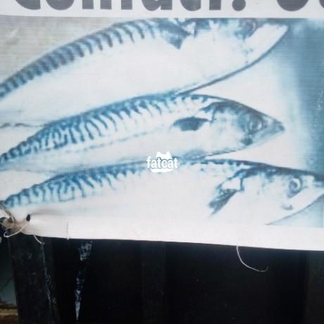 Classified Ads In Nigeria, Best Post Free Ads - carton-of-fresh-sardine-fish-big-0