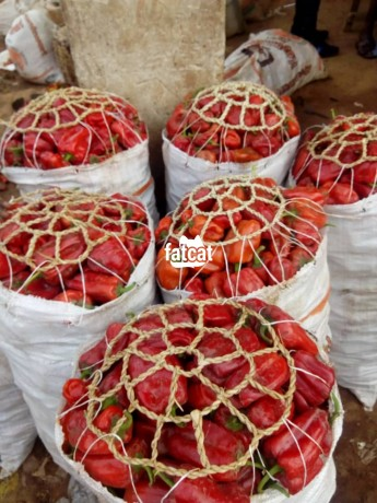 Classified Ads In Nigeria, Best Post Free Ads - fresh-farm-pepper-in-abaji-abuja-for-sale-big-1