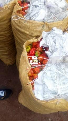 Classified Ads In Nigeria, Best Post Free Ads - fresh-farm-pepper-in-abaji-abuja-for-sale-big-0