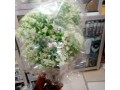 foreign-flower-small-1