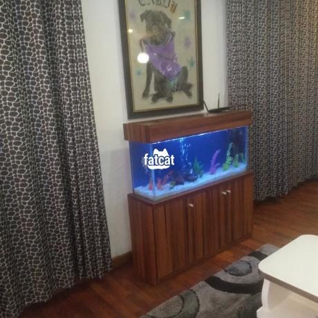 Classified Ads In Nigeria, Best Post Free Ads - lovely-standing-aquarium-big-0